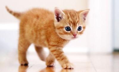 Dieren Wie Heeft Er Een Katje Te Koop Advertenties Com
