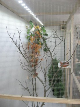 dieren - Compleet assortiment LED verlichting voor vogels ...